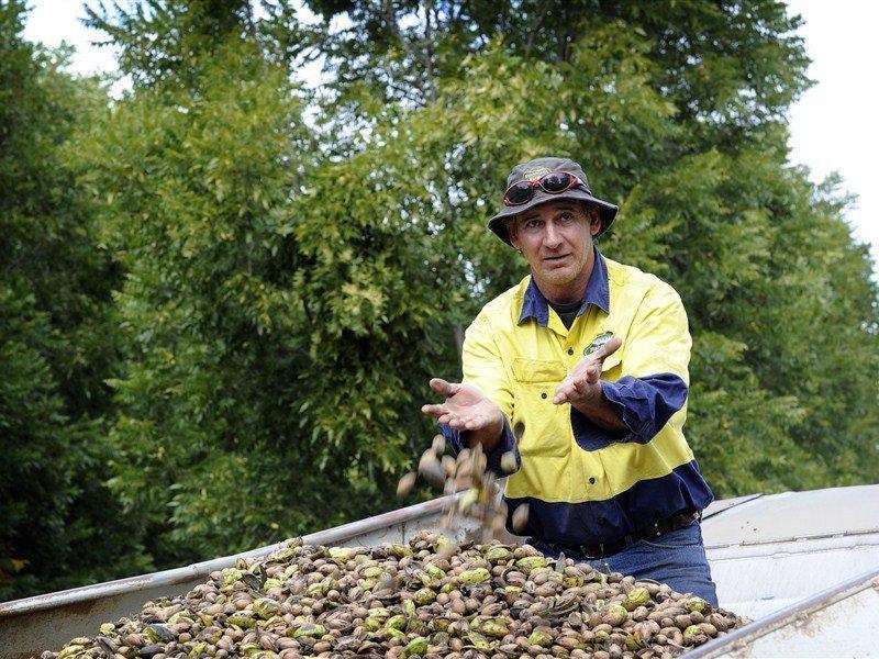 Stahmann-pecan-nut-farm-moree-attraction