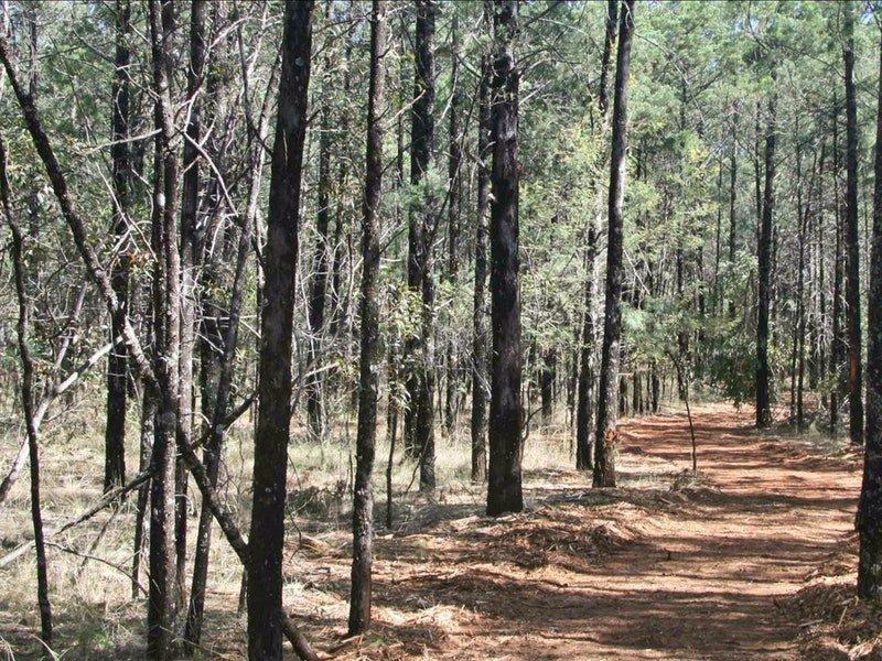 yana-y-warruwi-track